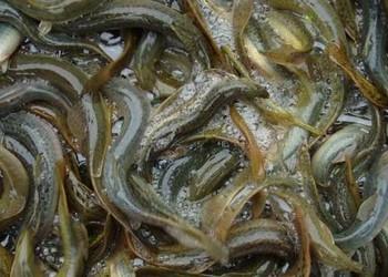 养泥鳅利润:养一亩泥鳅能挣多少钱?