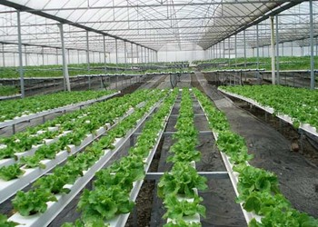 農業大棚里的創意創業項目及大棚補貼政策