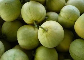 香瓜的食用功效與作用及禁忌(飲食養生)