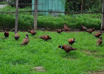 養七彩山雞+親子游戲活動年營收800多萬