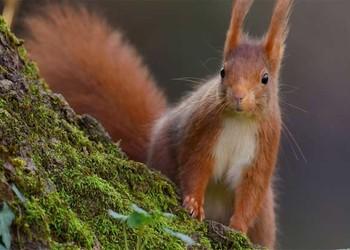 松鼠的品种及食物有哪些?是保护动物吗?