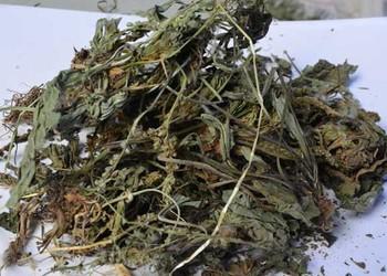 (藥膳)車前草的藥用功效與作用及食用方法