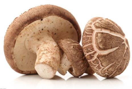 香菇的高产速生栽培新技术种介绍