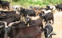 2018-2019年農村創業選擇哪些養殖項目比較好?