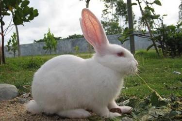 夏季兔子喂養管理有哪些重要措施?