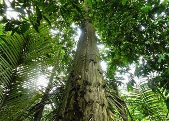 视频资料:沉香树栽培种养技术