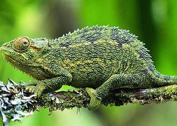 特種養殖:壁虎和蜥蜴的區分辨別