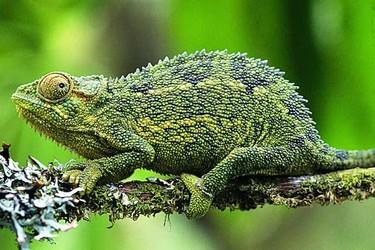 特种养殖:壁虎和蜥蜴的区分辨别