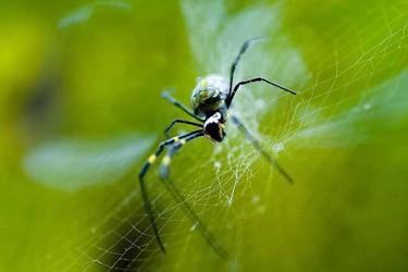 蜘蛛的天敌是什么(生物科普知识)