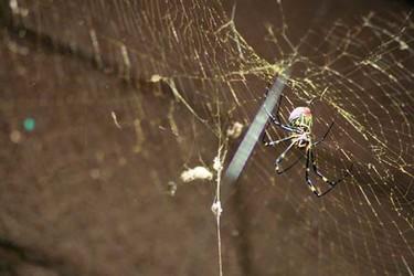 生物科普:探秘蜘蛛结网方法