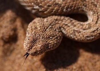 蛇、蟒、蚺、蝰有什么區分辨別