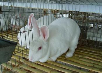 养兔:兔子疾病防治技术