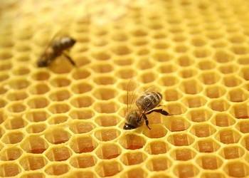 中藥&藥膳:蜂巢泡酒的藥用功效與作用
