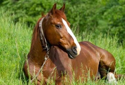 马的习性特点有哪些_养马:马的生活习性是什么?有哪些特点? - 69农村创业网