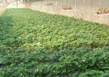 鄉村振興戰略下家庭農場有發展前景嗎?該如何經營為好?