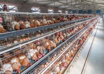 蛋雞場飲水系統的空場清潔流程
