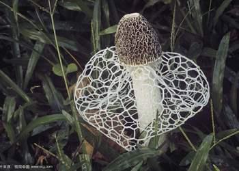 貴州織金縣:竹蓀立體換土標準化栽培方法