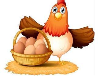 养鸡技术:鸡病的八大传播途径