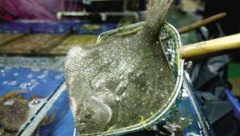 养鱼:多宝鱼饲养技术要点总结