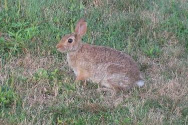 養兔創業項目:野兔飼養技術要點