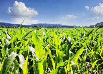 补贴政策解读:农业直补是什么?2018年能补贴多少钱?