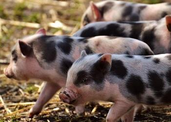 湖南湘乡市畜禽粪污资源化利用项目实施方案