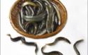 視頻:泥鰍人工飼養視頻資料匯總