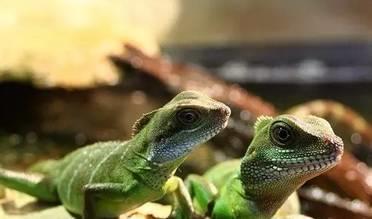 飼養蜥蜴寵物的準備工作有哪些?
