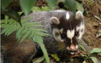 特種養殖創業故事:養獾子年入千萬[視頻]