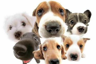 养狗专题:肉狗饲料配方及调配喂养