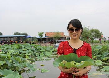 特种蔬菜创业故事:栽种磨盘莲+莲花下养殖泥鳅黄鳝
