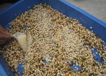 養鴿專題:鴿子飼料配方配制方案