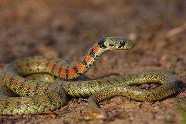 冬眠期间怎么养蛇(冬季养蛇方法)?