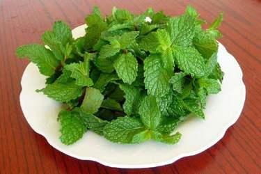 特種蔬菜:菜用薄荷栽植方法