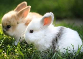 宠物兔饲养创业关键要点[视频]