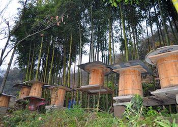 山區養蜂產業故事二則:山林養蜂致富