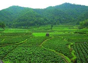 创业故事:1800米高山深山上种菜赚千万