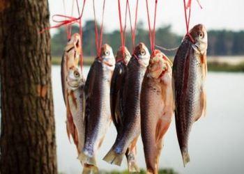 水产专题:盐干鱼的批量加工操作