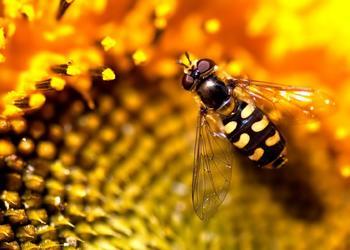養蜂:蜜蜂春季繁殖新方法及春繁技術要點