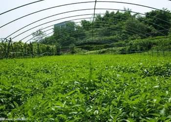 芒種時節的蔬菜栽培管理技術要點