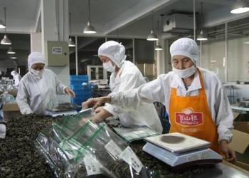 食用菌的工廠化加工生產技術[視頻]