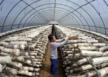 冬季栽培管護食用菌的安全防范措施