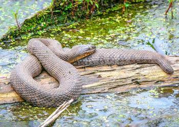 蛇的基本知識及蛇的別名大全