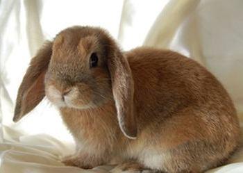 寵物兔養殖創業項目市場前景好[視頻]
