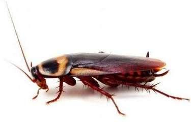 特種養殖專題:蟑螂飼養致富